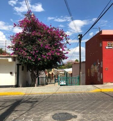 a walk around Oaxaca Centro